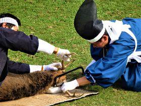 手に汗握る大捕り物!奈良の秋を彩る恒例行事「鹿の角きり」