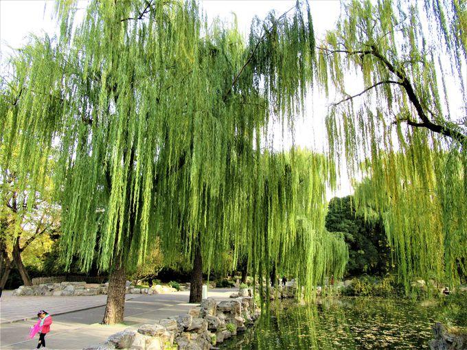 高木の並木などが見られる園内