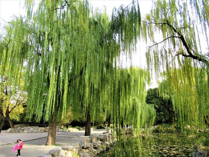 パンダだけじゃもったいない!北京動物園の隠れた魅力を紹介