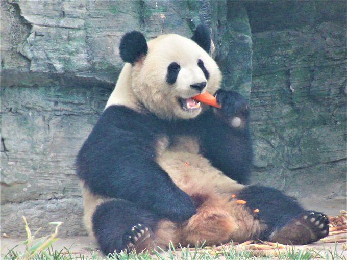動物も見よう!大熊猫館のパンダや野鳥