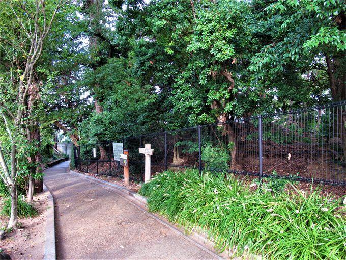 「惣構」(総構)の城郭であったことを示す猪名野神社の「岸の砦」