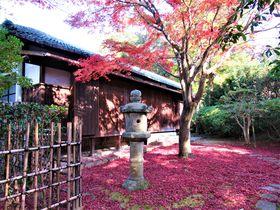 奈良国立博物館「秋の庭園を散策しませんか?」で紅葉や茶室を楽しもう