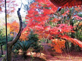 紅葉狩りを楽しもう!大阪府南部の名所・和泉市の「松尾寺」