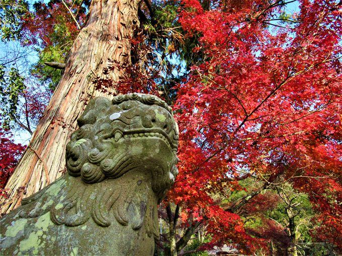 境内裏手の春日神社付近の紅葉