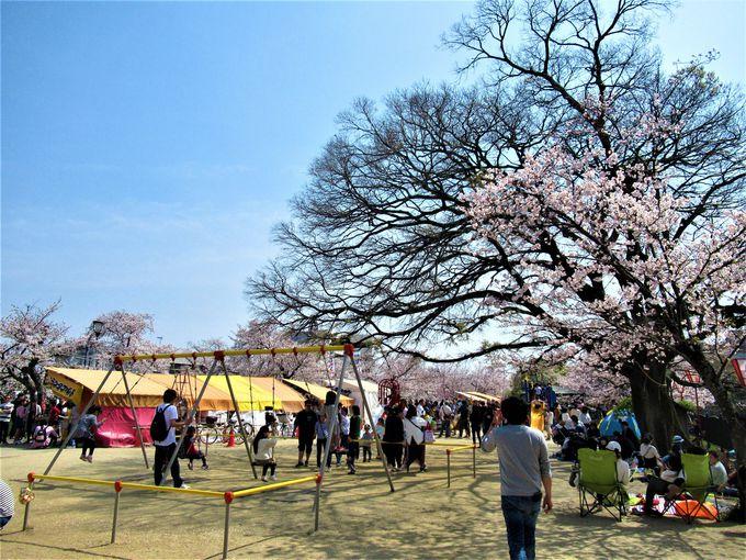 桜を愛でながらくつろごう!大中公園の様子