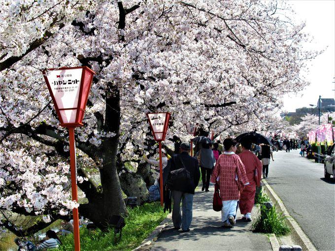 数キロメートルにわたって続く桜並木
