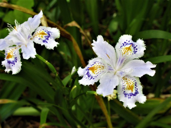 萬葉植物園で見られる植物の数々