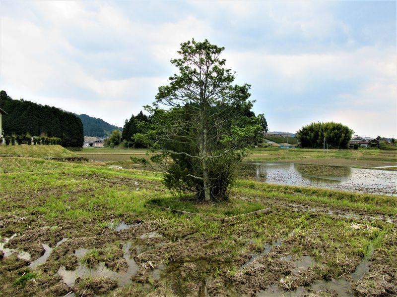 神さまのお休み処!?珍しい信仰が残る奈良市「都祁」で神社・古墳めぐり