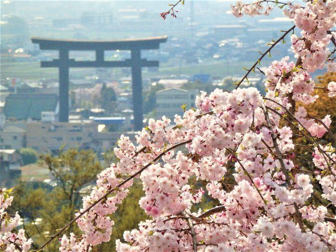 桜の季節に!眺望抜群の奈良県・大神神社「大美和の杜展望台」