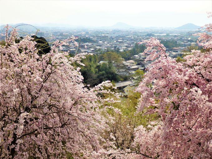 奈良盆地を一望!展望台からの眺め