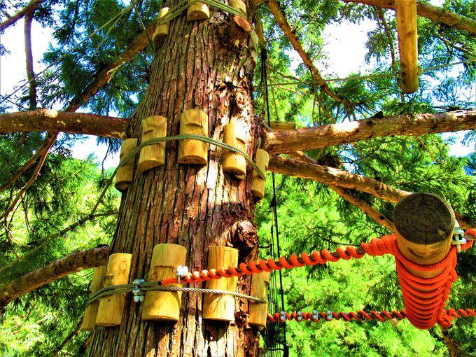森林浴を楽しもう!ハンモック状態のくつろぎスペース