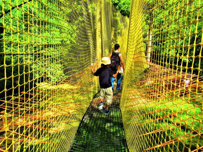 実際に渡ってみよう!吊り橋からの眺め