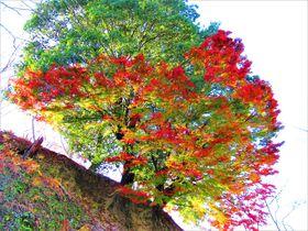 秋も意外に美しい!桜の名所・奈良の吉野山で紅葉狩り