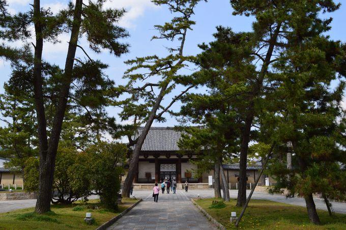 まずは松並木を通って、いかるがの里の中心である法隆寺から