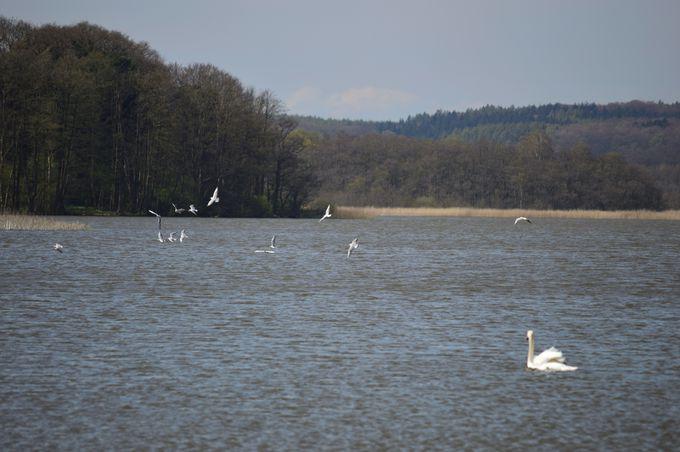 水鳥が集う湖水や植物の公園