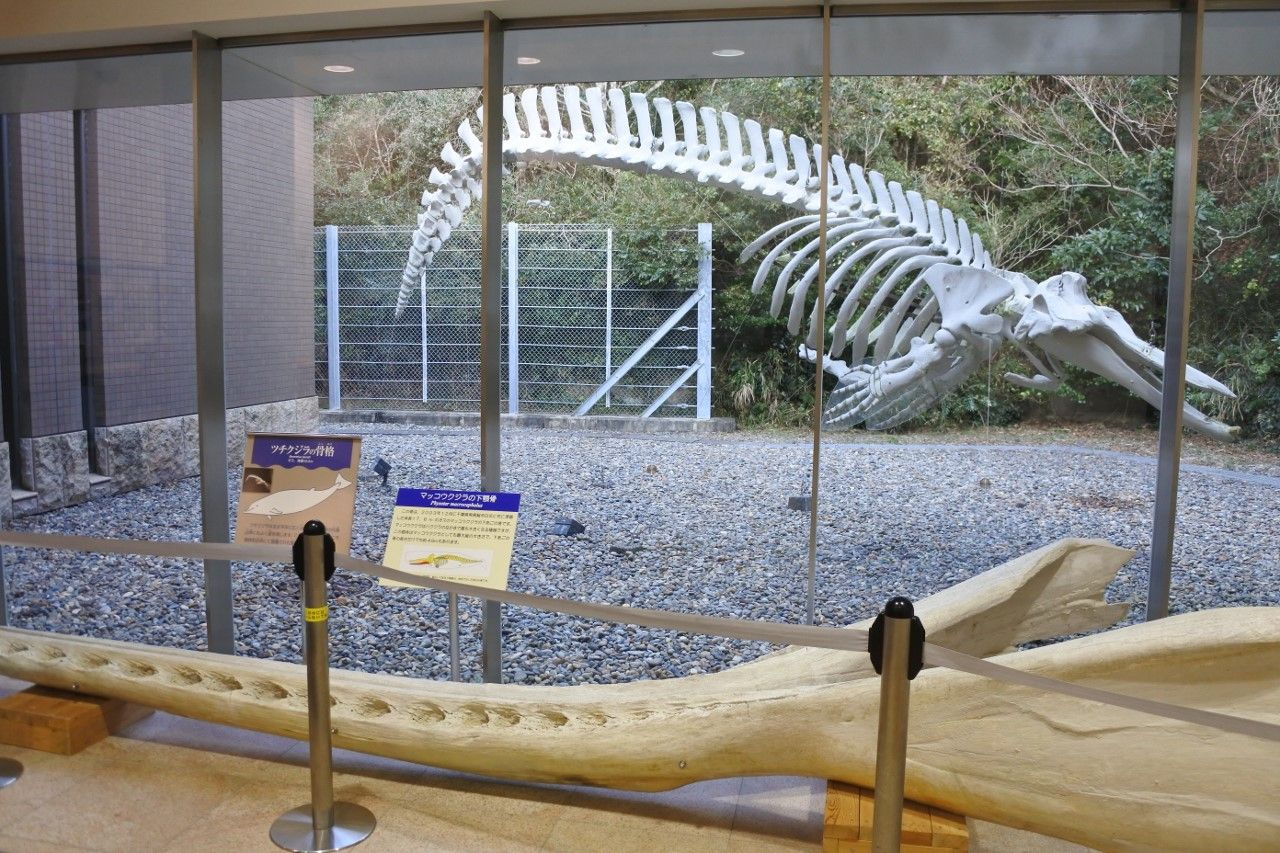4.千葉県立中央博物館分館 海の博物館