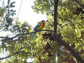 鳥好き必見!南半球の鳥が目の前に!埼玉「キャンベルタウン野鳥の森」
