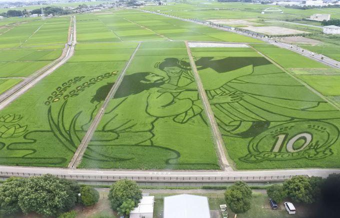 成長とともに変化する、田んぼアートは生きた芸術