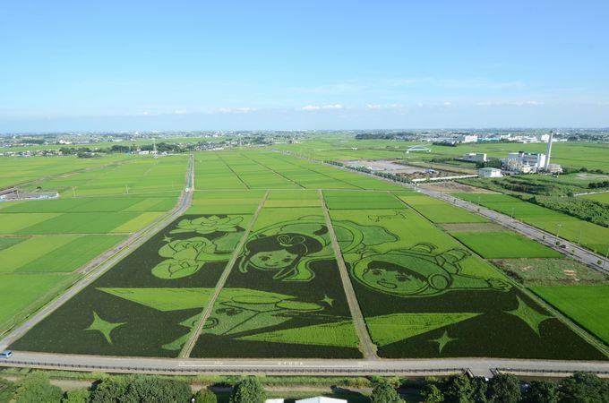 2008年から始まった田んぼアートは年々進化を遂げて
