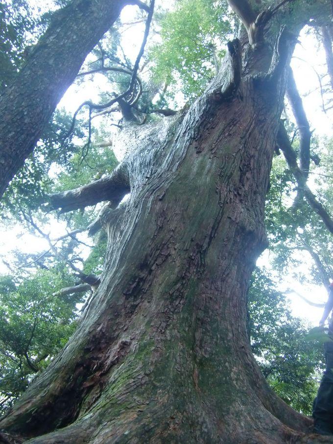 那智原始林の美しさを全身に感じながら歩く