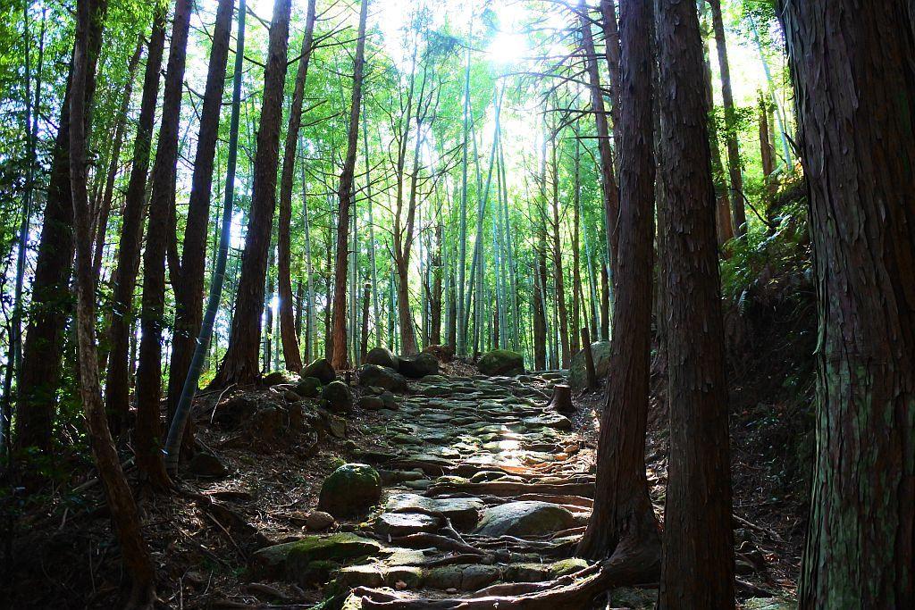 4.熊野古道 松本峠