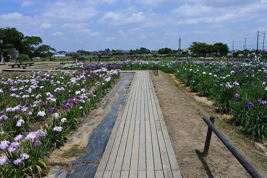 花しょうぶの向こうに田園と空の開放的な風景