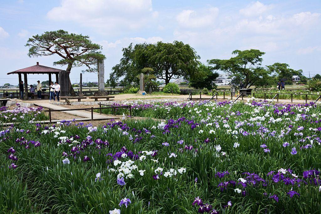 花のまち・久喜の6月は青が主役!