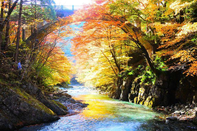 澄みきった水と紅葉をいつまでも眺めていたくなる