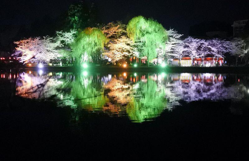 湖面に輝く夜桜ライトアップ!千葉「八鶴湖」の桜は優しくも艶やか