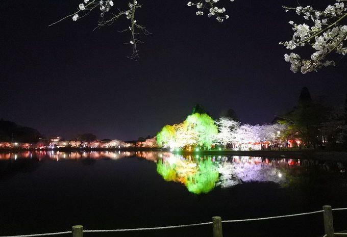 昼間ののどかさと夜の妖艶さ、どちらも八鶴湖の魅力