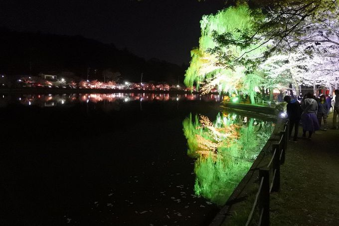 夜のライトアップでは弁天島が華やかに!