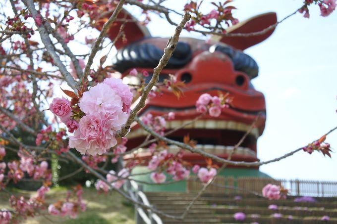 桜リレーのアンカーは愛らしいボタンザクラ