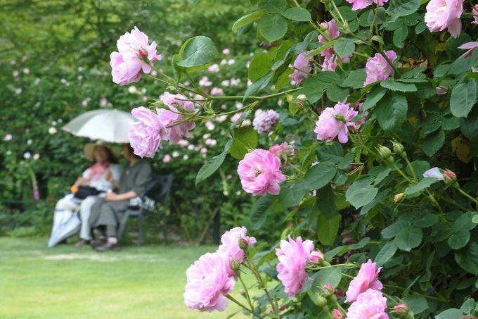 バラのアーチをくぐり、ベンチで優雅にひと息