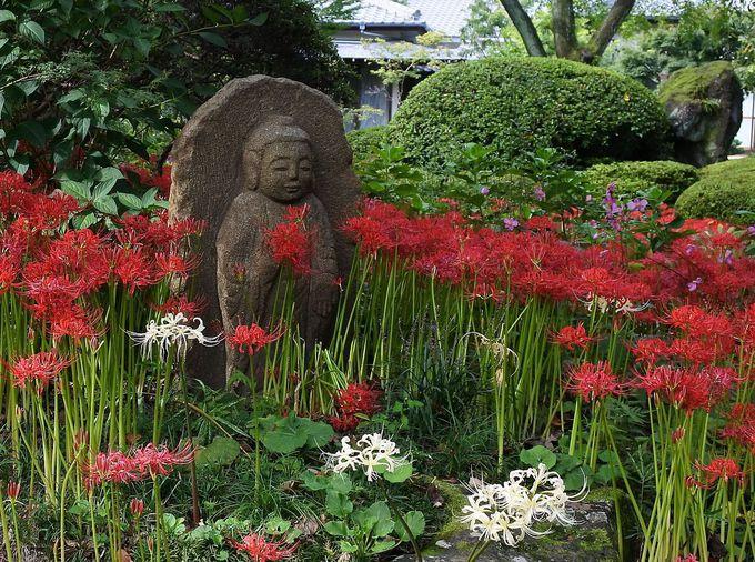 彼岸花の中に佇む石仏との調和が美しい