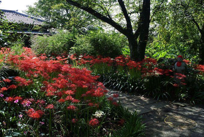 四季の花が咲く東国花の寺「常楽寺」
