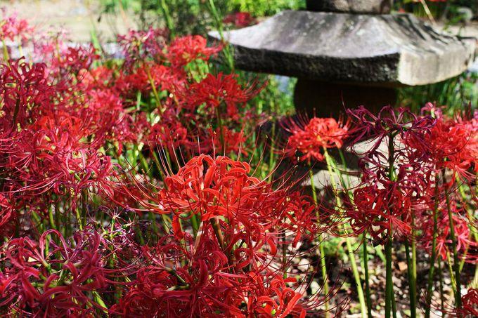 日本の秋の美しき眺めがここに
