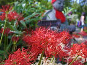 鮮烈な赤と静謐の石仏に心つかまれる 群馬「常楽寺」の彼岸花