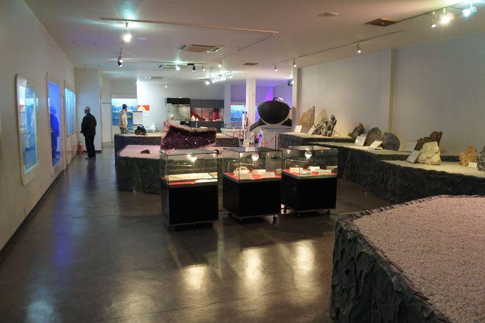 珍しい化石や貝の展示、そして美味しい海鮮も食べられる