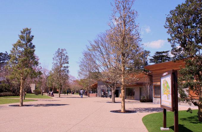 アクティビティもいっぱいの都市公園