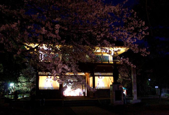 金乗院仁王門前の桜が美しい