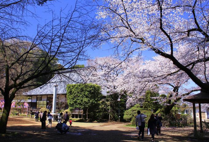 しっとり観賞するなら劫初の桜や枝垂れ桜