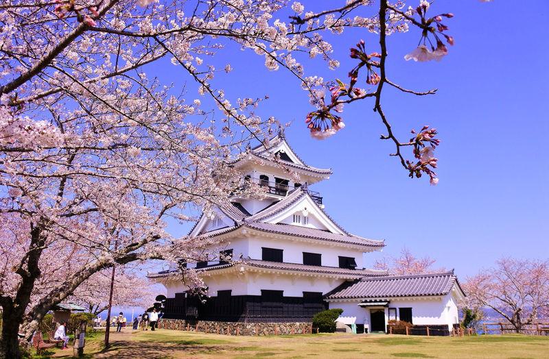 城・海・桜のコラボレーション!千葉「館山城」で春色絶景散歩