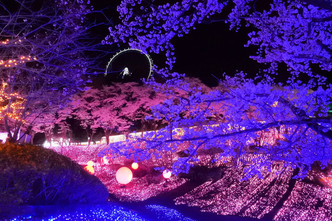 「プレジャーフォレスト」は桜の名所でもあるんです