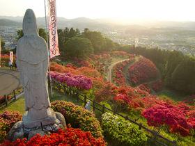 山がカラフルに花化粧!茨城「笠間つつじ公園」はGWが見頃
