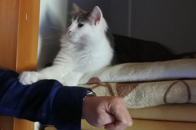 猫ちゃんと楽しく遊ぶには?