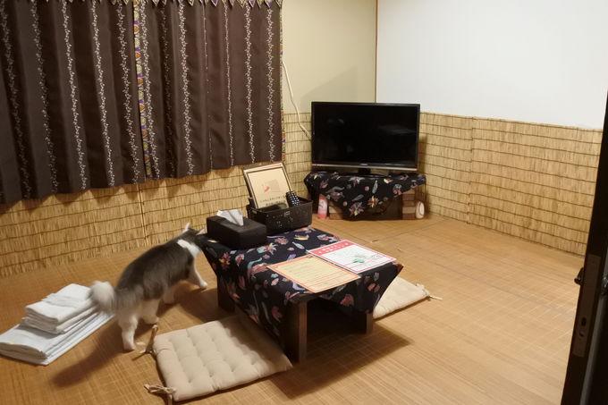 猫スタッフと過ごす民宿スタイルの宿