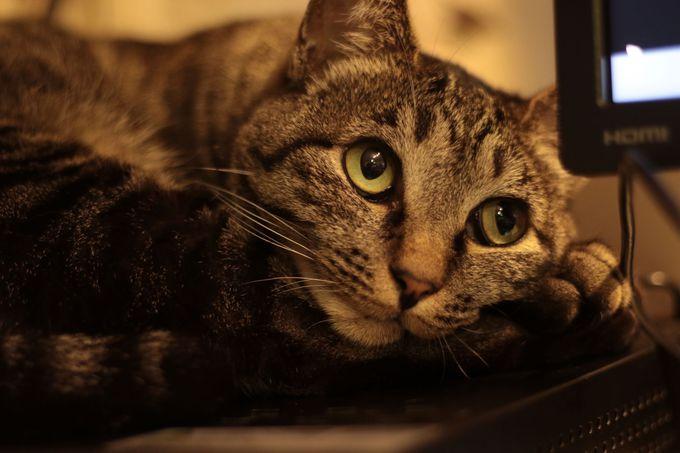 魅惑の猫スタッフをご紹介!