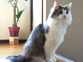 猫スタッフがおもてニャし!白浜「猫と過ごすバリ風民宿Meong」