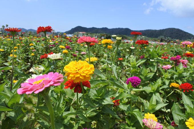花摘みも一年を通して楽しめます