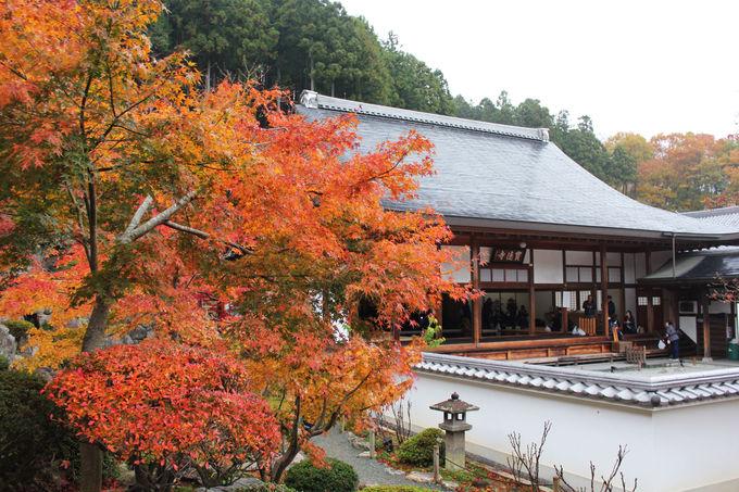 関東では希少な床もみじが見られるお寺